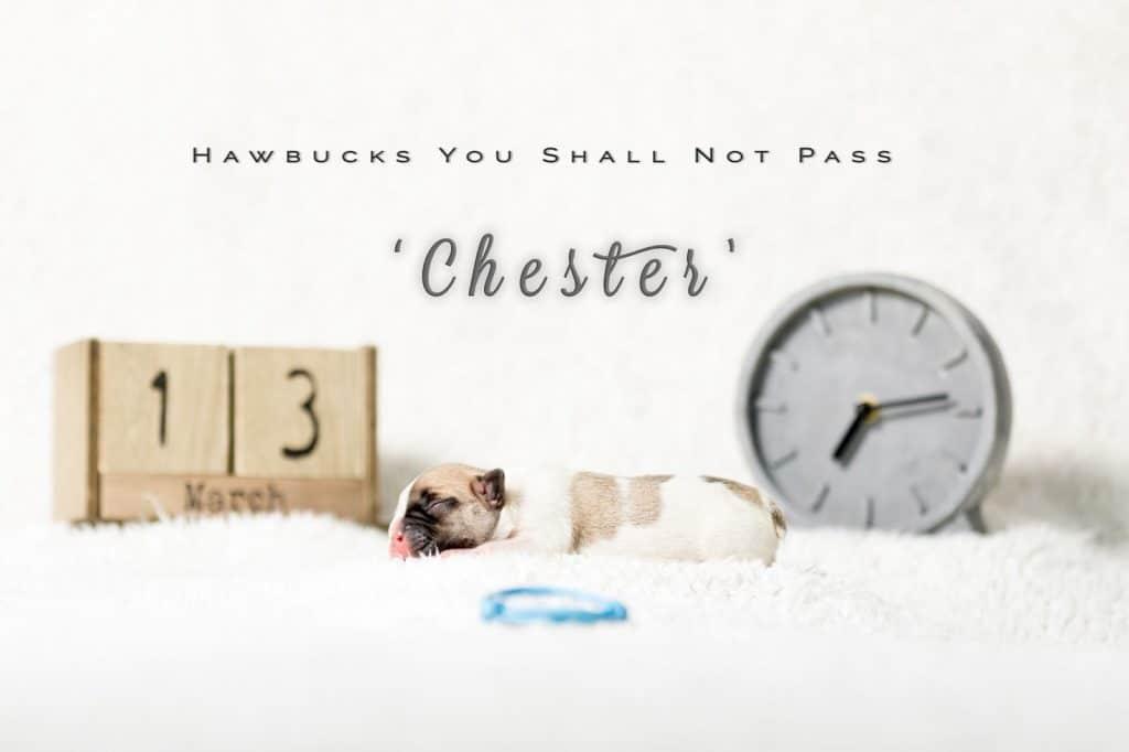 <p>Nacho &amp; Chester</p>