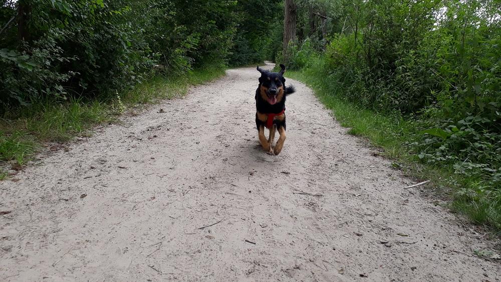 Sennah wandeling Maarssenveense plassen