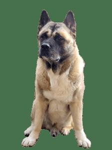 Review 'Kijk eens naar je hond' - Monique Bladder