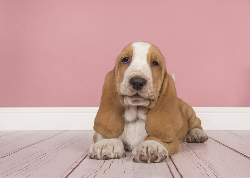 Emotie marketing de hond