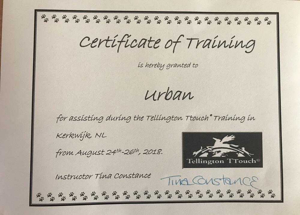 certificaat ttouch hond