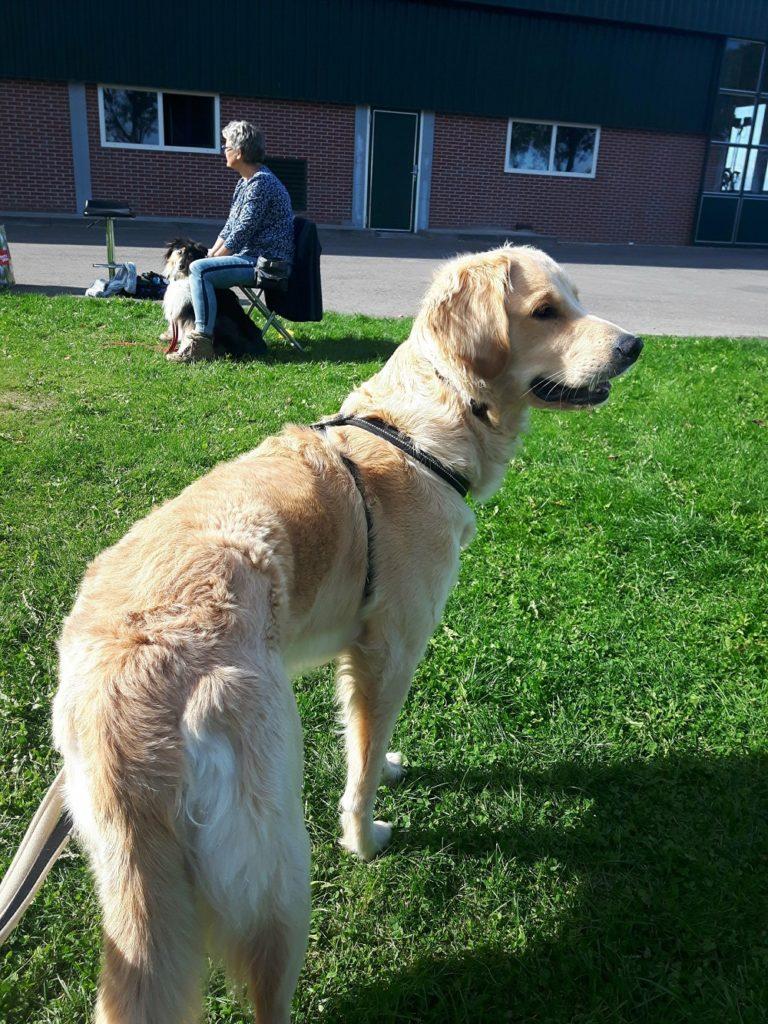Guus bij de hondentolk