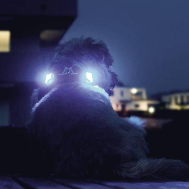 Luumi hondenlampje