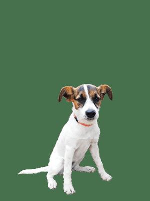 Poes de Hond
