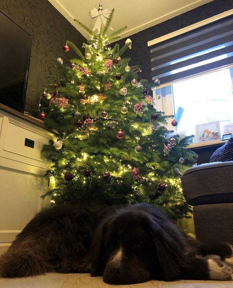 Bumper onder de kerstboom