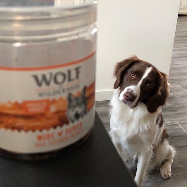 Wolf of Wilderness treats