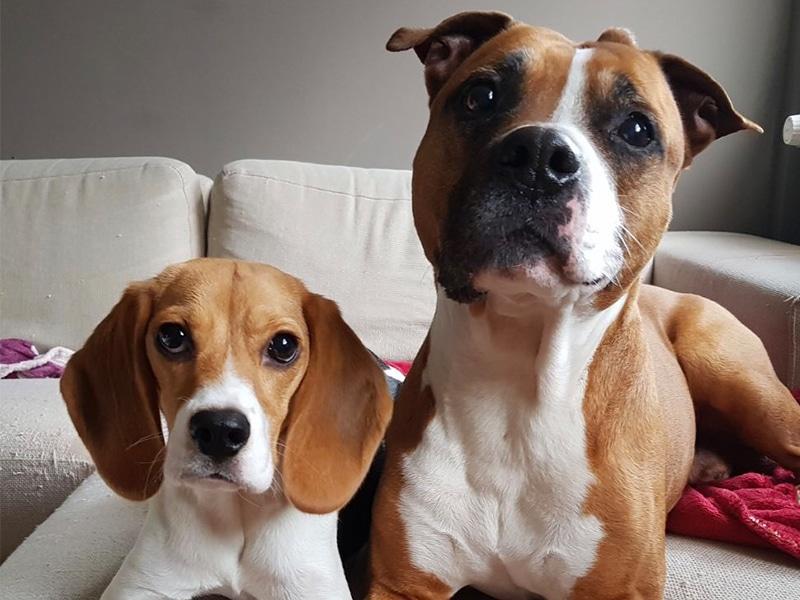 <p>Daisy de Beagle</p>