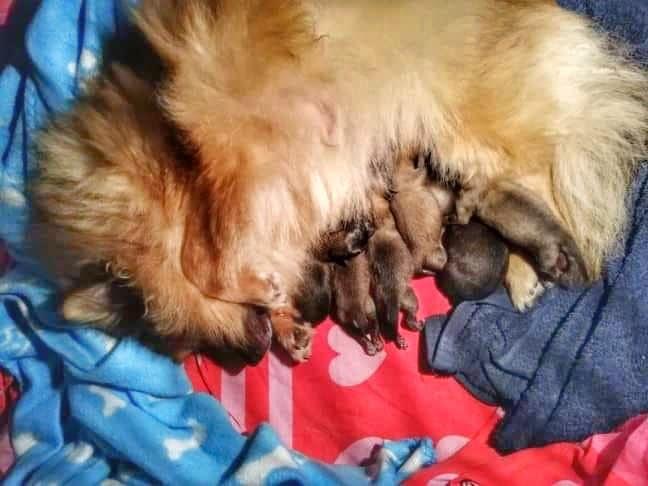 Nala met de pups