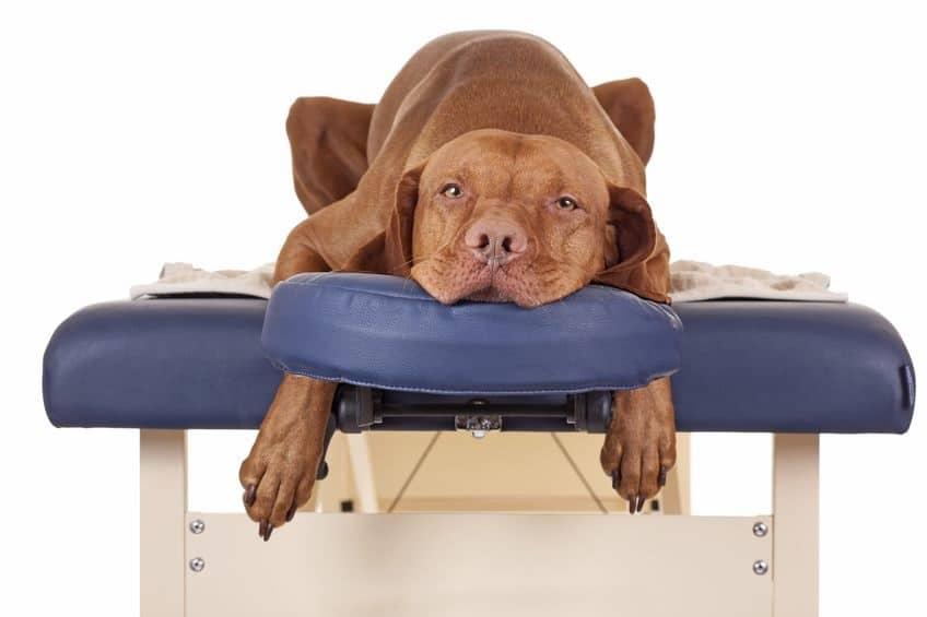 osteopaat voor de hond