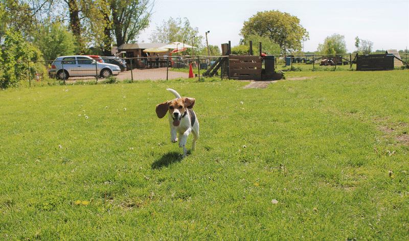 Hondenspeeltuin Daisy veld begin