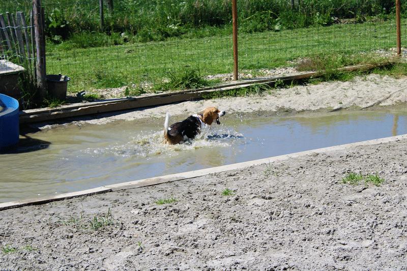 Hondenspeeltuin Daisy in de vijver