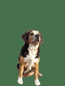 Welke hondenvoeding krijgt Paika