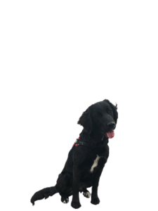 De hondenschool (deel 1)