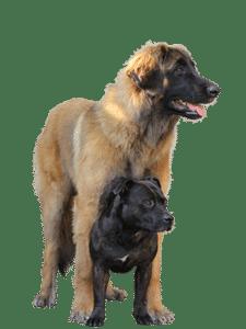 Kunt u, uw hond bij zich houden?
