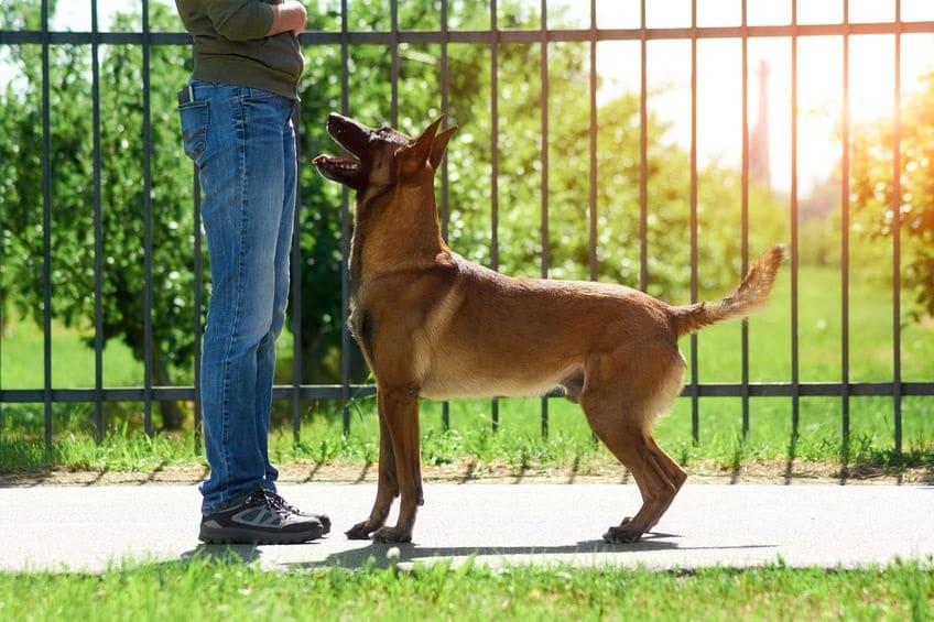 Beloning hond