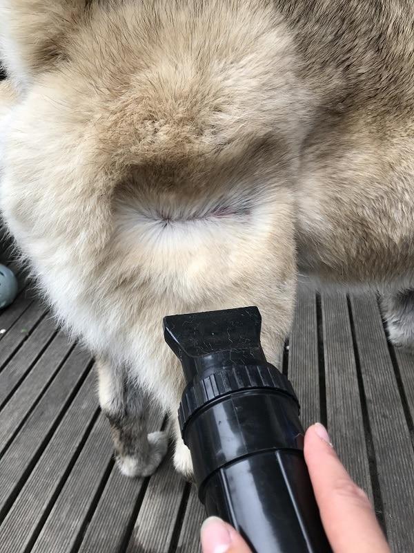 waterblazer hond