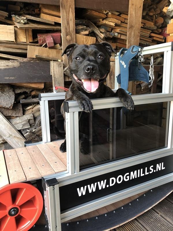 tredmill hond
