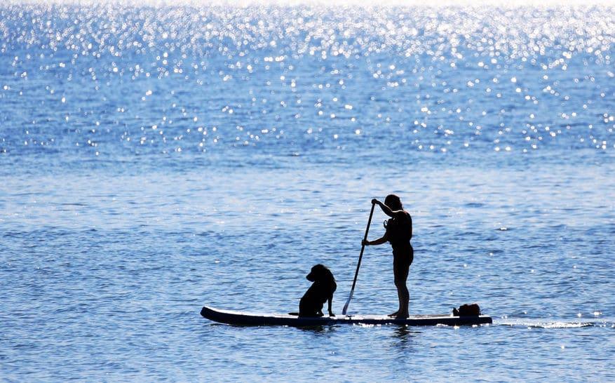 paddle board met hond
