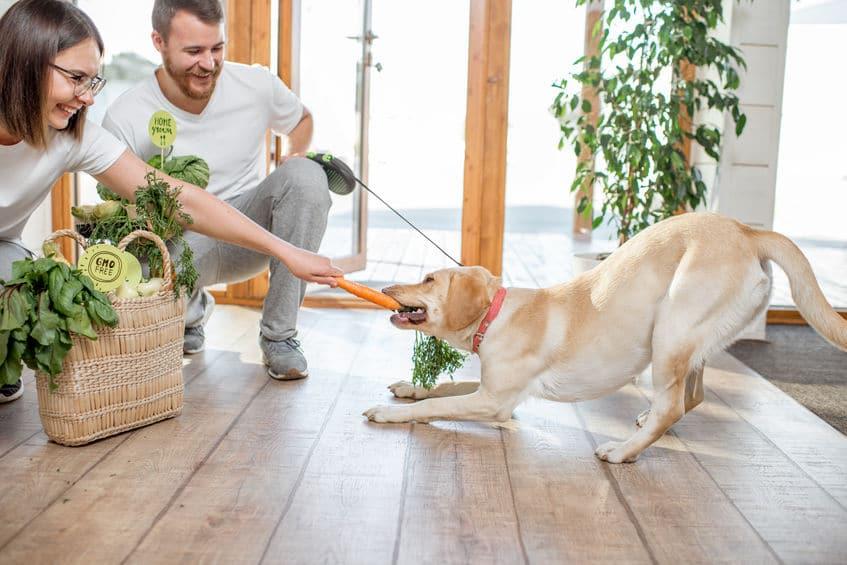 vegetarisch hondenvoer steeds populairder