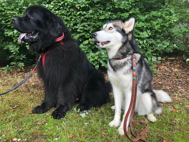Bark in the Park hondenbrienden ontmoeten