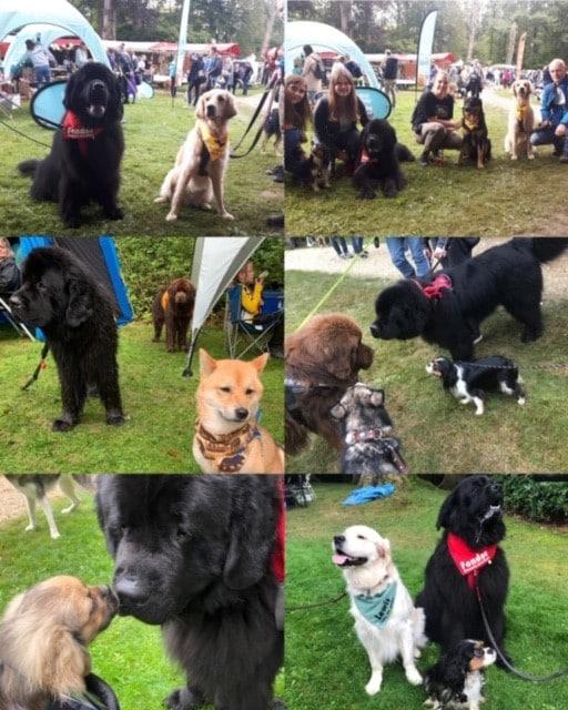 heel veel leuke honden ontmoet op Bark in The Park