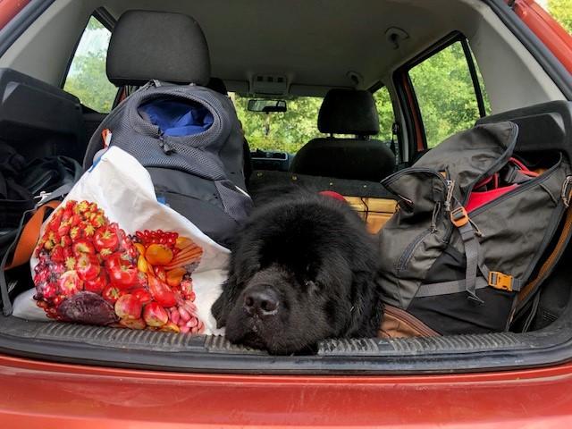 Onderweg naar huis van Bark in the Park