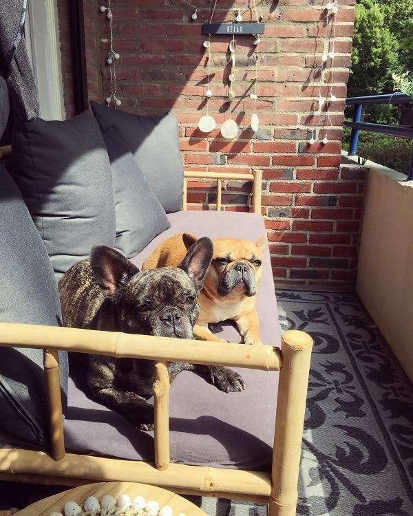 buitenhonden Jolie & Jaeda