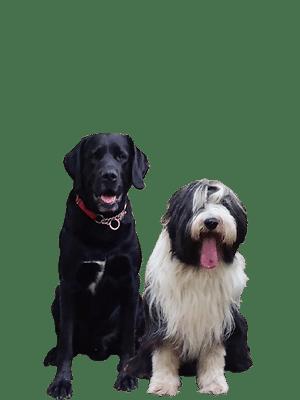 Odin & Bommel