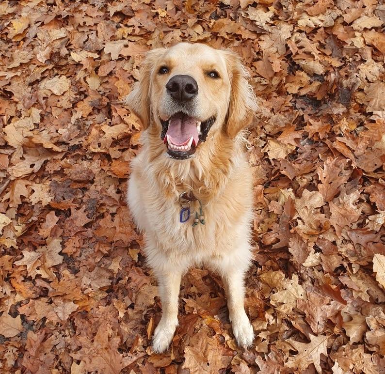 Herfst honden