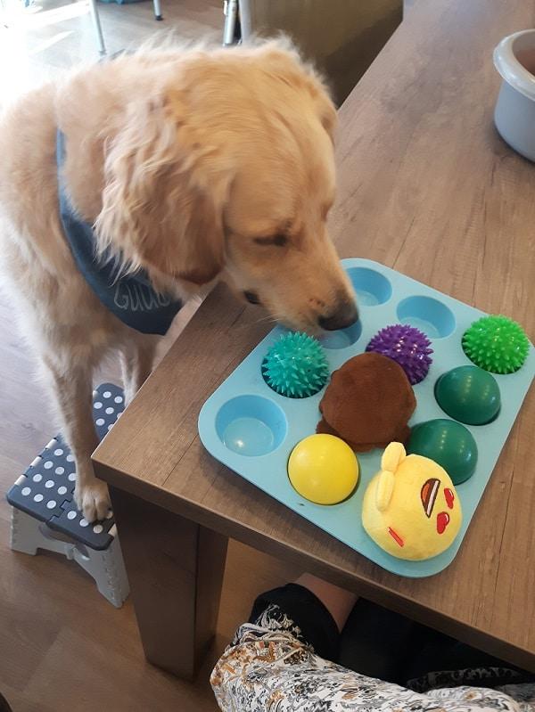 Muffin snuffelspel hond