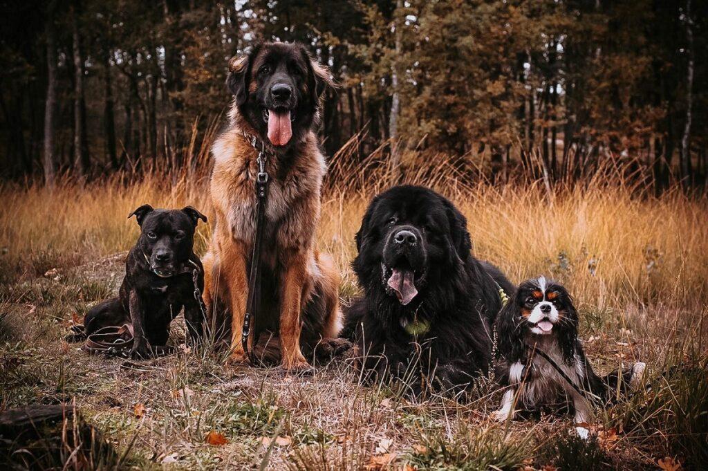 herfst wandeling honden