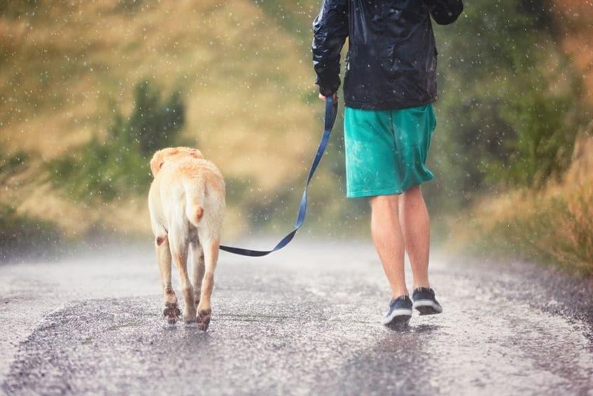 wandelen hond in de regen