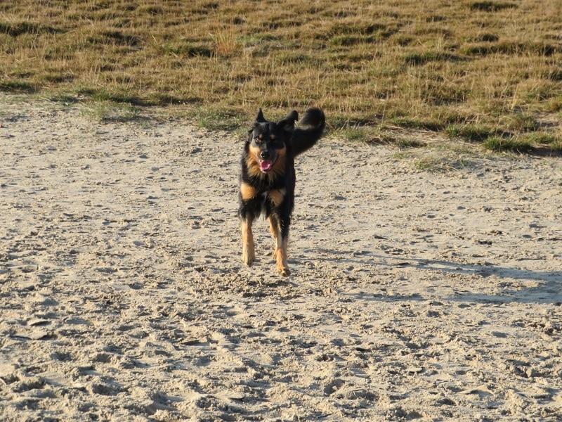 met de hond naar de Soester Duinen