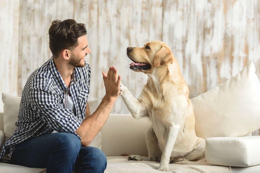 Teamwork steun jouw hond