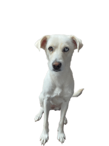 Hoe om te gaan met een onzekere hond? Een paar tips!