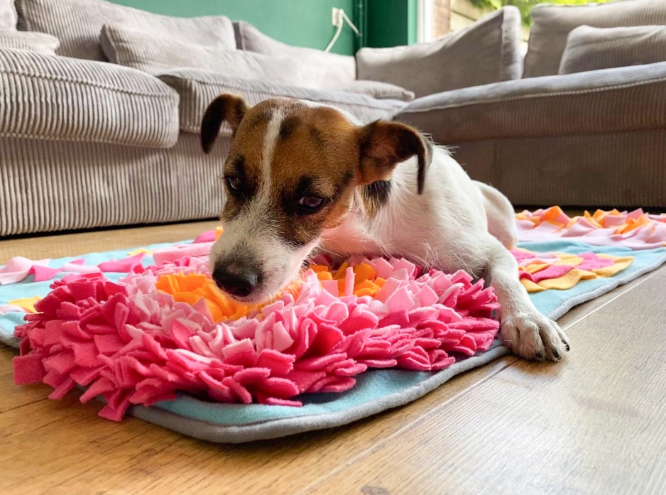 Snuffelmatten voor de hond