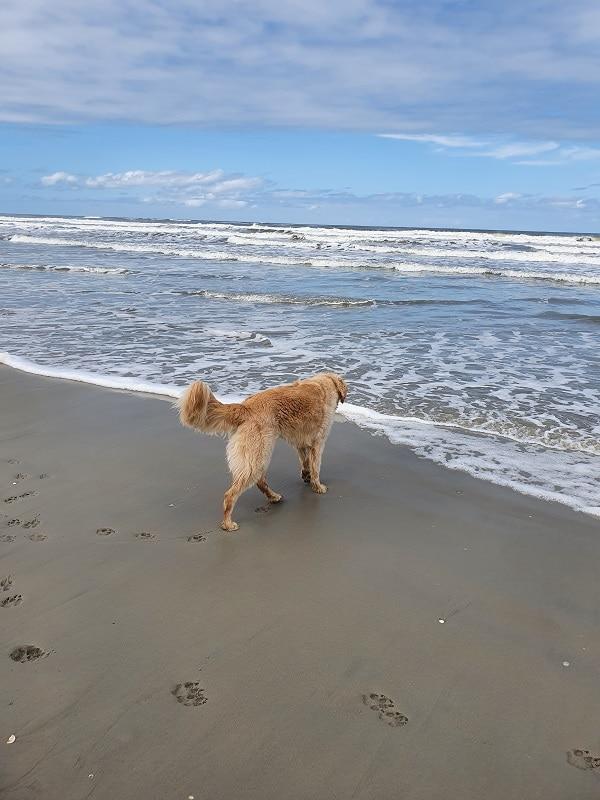 Guus op het strand