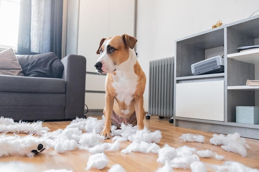 Verlatingsangst hond slopen