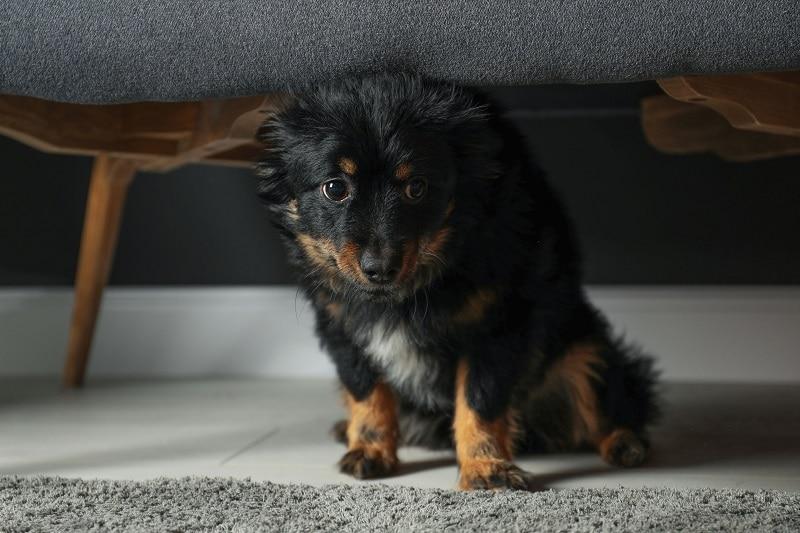 Angstige hond verstopt zich onder de bank