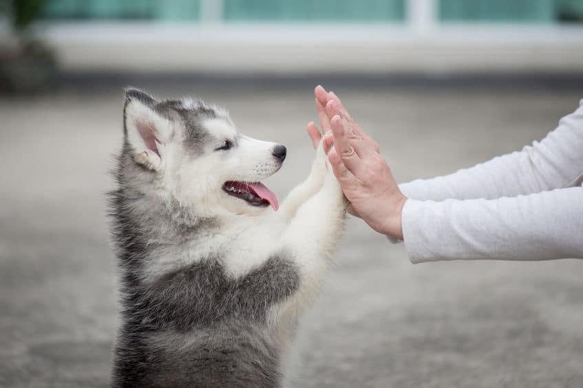 Visolie gezond voor puppies