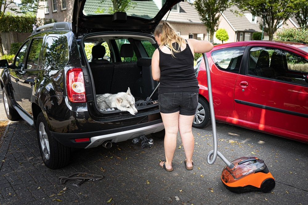 Thomas stofzuiger hond auto stofzuigen