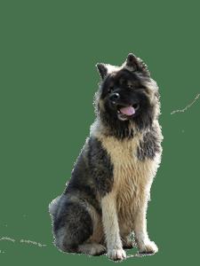 Op pad met een pup