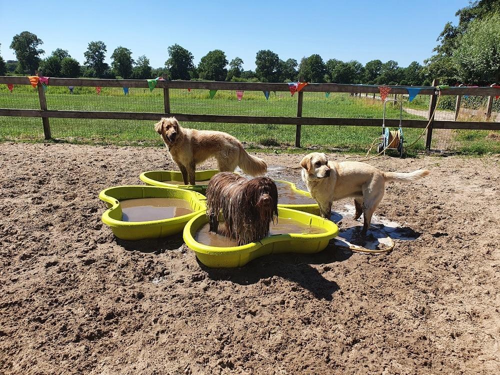 Guus en opvanghonden in modderbad