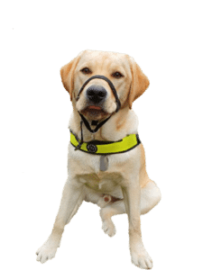 Moet een hulphond altijd werken?