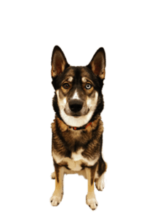 Hond & Liefde: Waarom je hond van je houdt