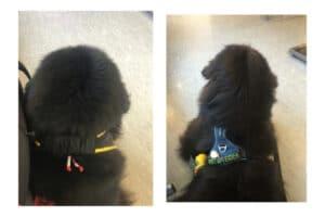 Honden wachten samen in wachtkamer dierenarts
