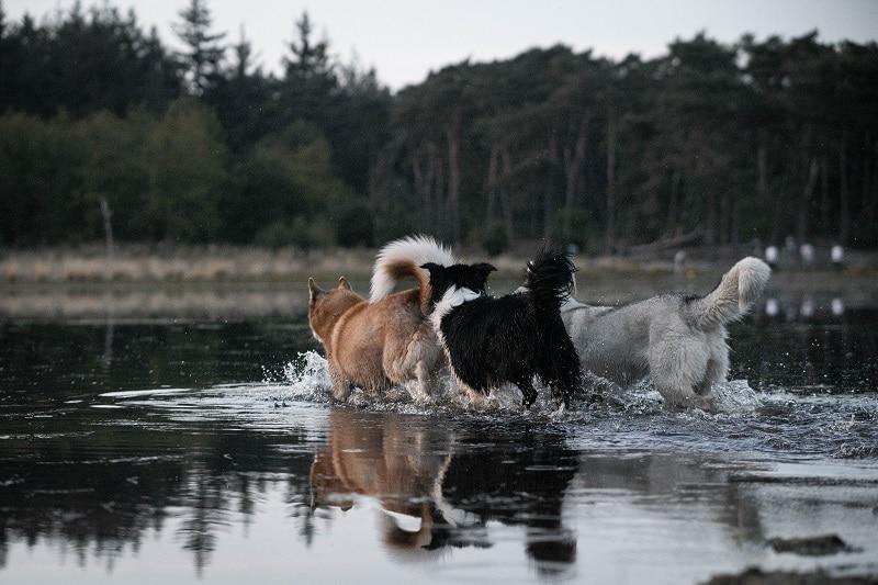 Lekker samen in het water