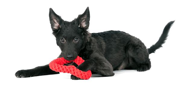 hondenspeeltje hart