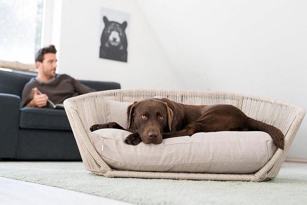 Design hondenmand beige met bruine labrador