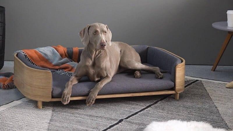 Design hondenmand Kyali